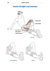 Seated Straight-Leg Extension