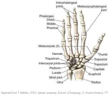 Deep Tissue Massage Hand