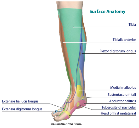 Strap Taping Ankle And Foot Support Critical For Maintaining Balance