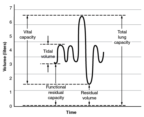 pulmonary function test the value among Reference values for pulmonary function tests of ofresults in a pulmonary function test among all technicians by month over the course of the examination.