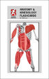 Anatomy & Kinesiology Flashcards Cover