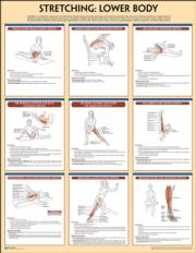 Stretching Poster: Lower Body