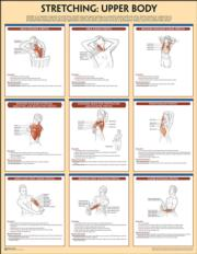 Stretching Poster: Upper Body