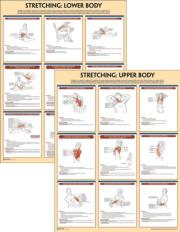 Stretching Anatomy Poster Series