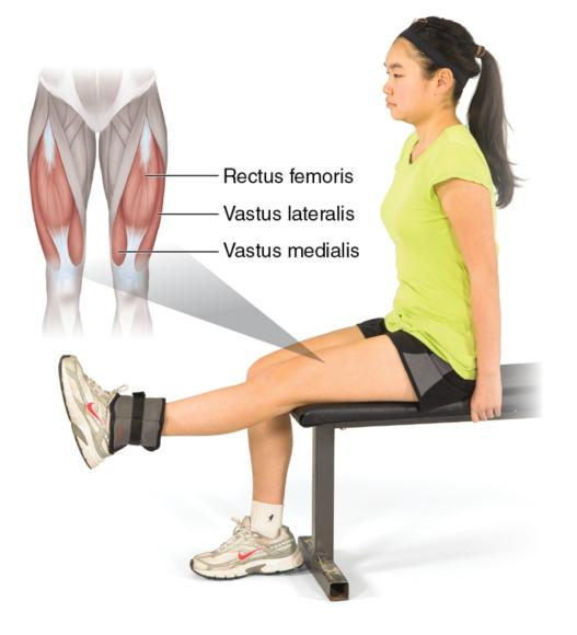 Quadriceps Muscle Exercises This Exercise Uses The Muscles