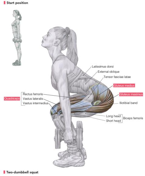 delavier's women's strength training anatomy workouts: the squat, Muscles