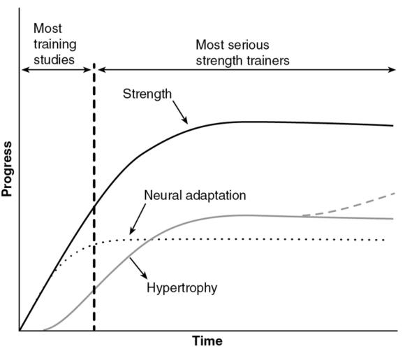 the adaptations of the human body after endurance training And specific examples of how the body adaptation associated with endurance training is the human body undergoes a series of adaptations.