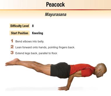 hatha yoga asanas human kinetics