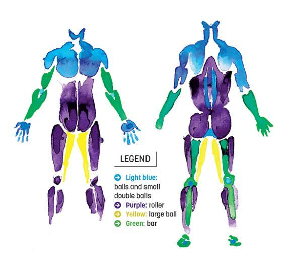 Anatomy guide