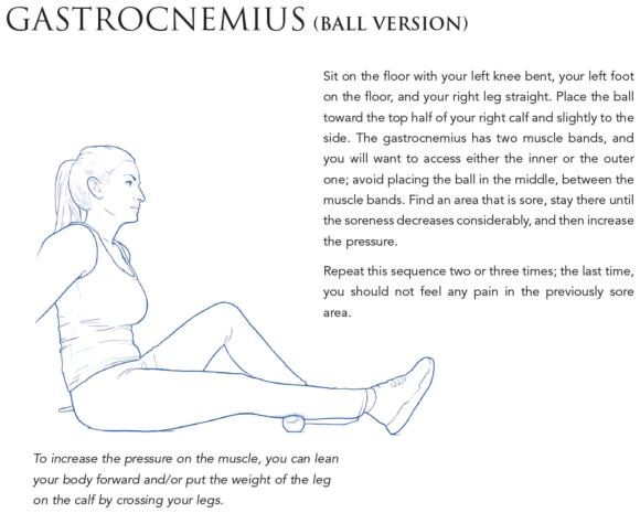 Gastrocnemius (ball version)