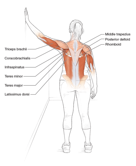 Shoulder Adductor Stretch