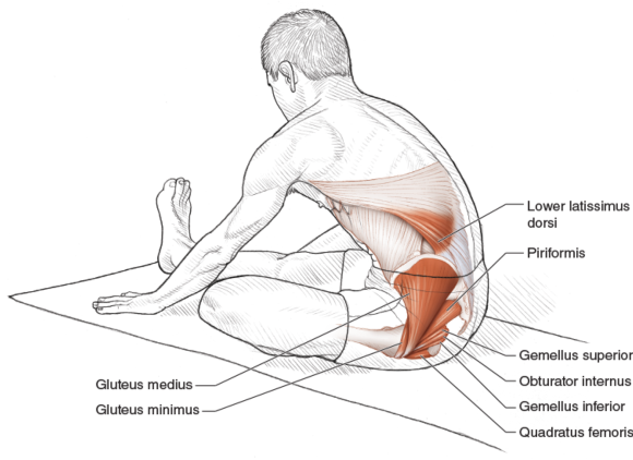 Intermediate seated hip external rotator and extensor stretch