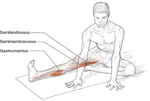 Intermediate Seated Hip Extensor and External Rotator Stretch