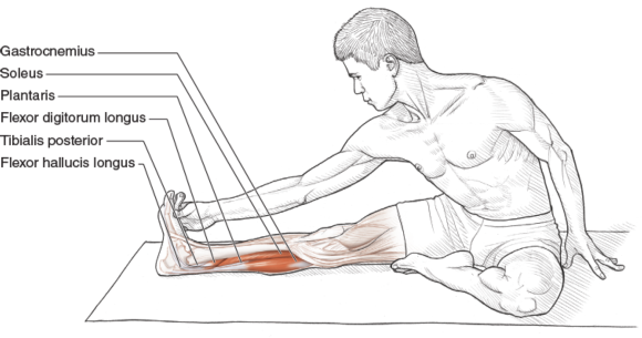 Intermediate Seated Hip External Rotator, Extensor, Knee Flexor, and Plantar Flexor Stretch